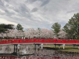 岩槻城址公園の桜の画像