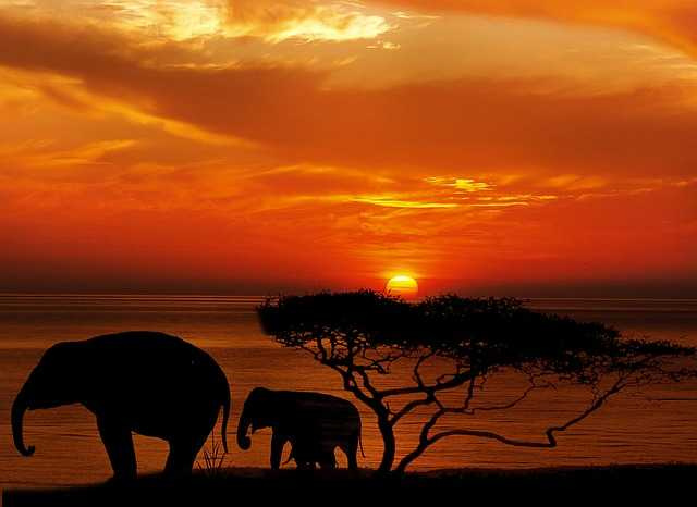 ゾウの画像